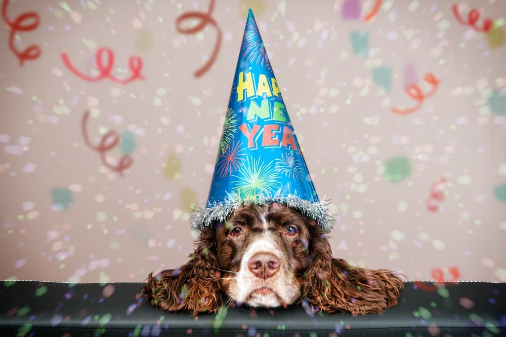 grumpy looking dog wearing a new year hat with confetti