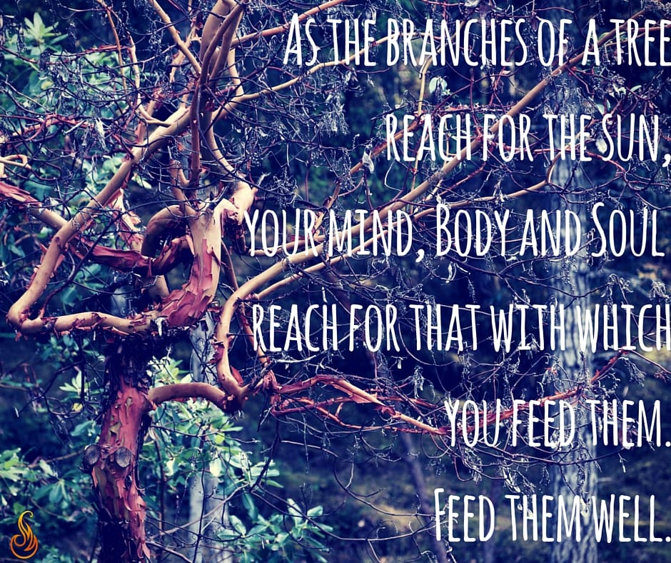 The Metaphor of the Tree